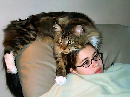main coon cat with girl